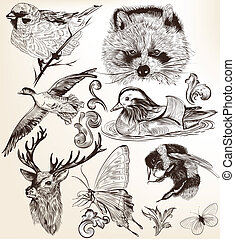 Vector set of detailed hand drawn - Collection of high...