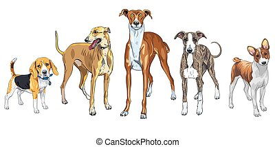 Vector set of Dogs different breed - Vector set of dogs ...