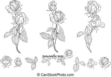 Vector set of flower compositions with rose flowers.