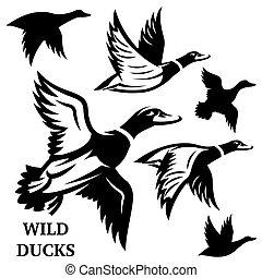 Vector set of flying wild ducks. Vector illustration.