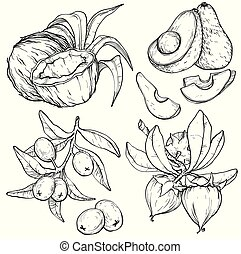 Vector set of food and cosmetic care ingredients. Organic hand drawn