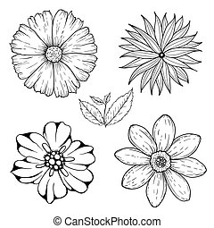 Vector set of hand drawn colorless flowers and leaf branch. Black white illustration isolated on white.