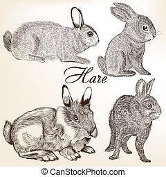 Vector set of hand drawn rabbits