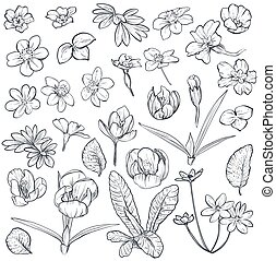Vector set of hand drawn spring flowers and leaves