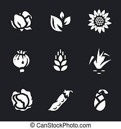 Vector Set of Harvest Icons. - Cotton, tea, sunflower,...