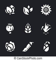 Vector Set of Harvest Icons. - Cotton, tea, sunflower,...