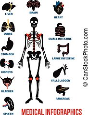 Vector set of human anatomy