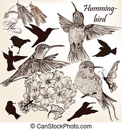 Vector set of hummingbirds in vinta - Vector set of detailed...