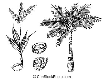 Vector set of illustration of topical palms