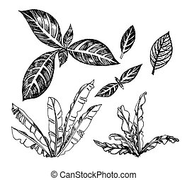 Vector set of illustration of topical palms. Exotic leafs&