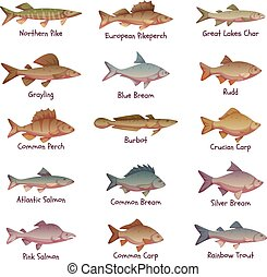 Vector set of most popular freshwater fishes