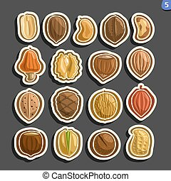 Vector Set of Nuts icons