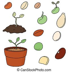 vector set of plant seed