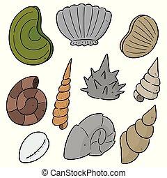 vector set of sea shell