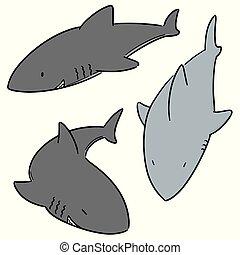 vector set of sharks