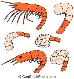 vector set of shrimp