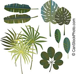 Vector set of tropical palm leaves