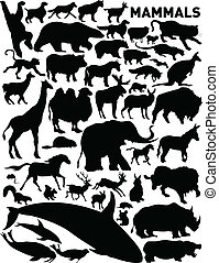 mammals - vector set of various mammals