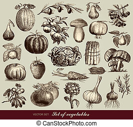 Vector set of vegetables