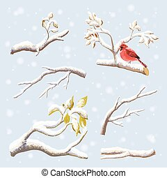 Vector set on winter branches with snow, birds.