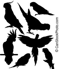 vector, set, papegaaien