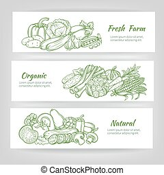 vector  set template banners