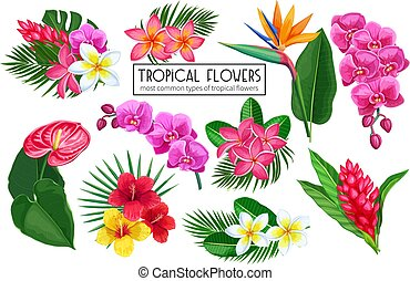 Vector set tropical flowers. Jungle exotic strelitzia, anthurium, hibiscus, plumeria, orchid and ginger flower. Illustration for summer tropical paradise advertising design vacation.