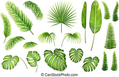 vector set tropical leaves