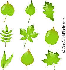 vector, set, vrijstaand, leaves.