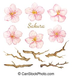 Vector Set watercolor elements. Collection sakura flowers and branches.