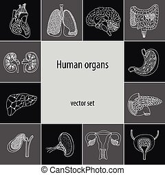 Vector set with human internal organs