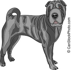 Vector. Shar Pei dog breed. - Shar Pei dog breed in front...