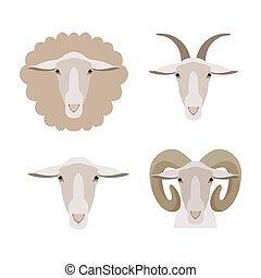 Vector sheep, goat ram lamb head isolated. Flat, cartoon style