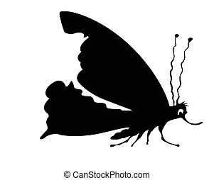 vector silhouette butterfly on white background