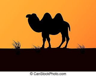 Vector silhouette camel on the background sunset
