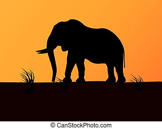 Vector silhouette elephant on background sunset