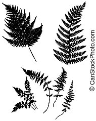vector silhouette fern on white background