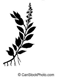 vector silhouette field plant on white background
