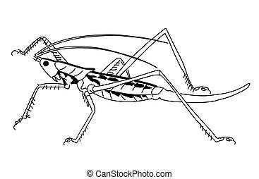 vector silhouette grasshopper on white background