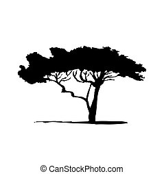 Vector silhouette of acacia tree. African flora
