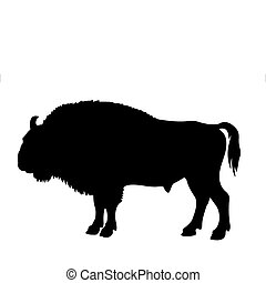 vector silhouette of the buffalo on white background
