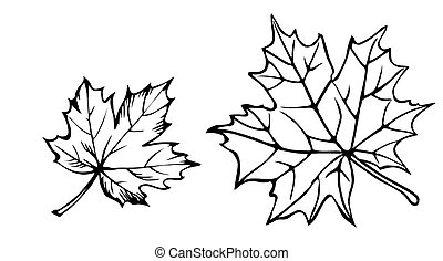 vector silhouette of the maple leaf on white background