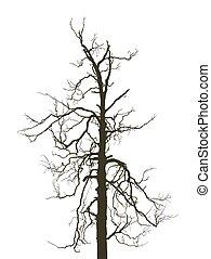 horrible birch
