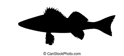 vector silhouette of the pike perch on white background