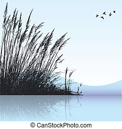reeds - vector silhouette of the reeds