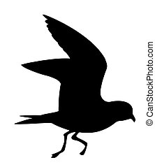 vector silhouette of the wild bird on white background