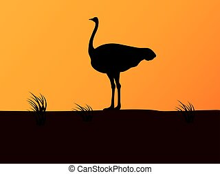 Vector silhouette ostrich on background of sunset