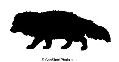 vector silhouette polar fox