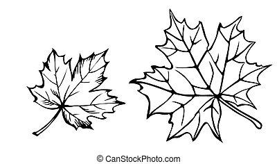 vector, silhouette, van, de, esdoorn blad, op wit,...