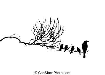 vector, silhouette, van, de, vogels, op, tak